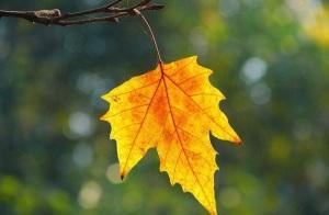 信念的力量:《最后一片树叶》